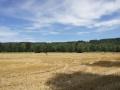 Klosterbraeu Schaeftlarn 036.jpg